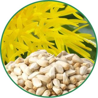 Carthamus Tinctorius Safflower Seed Oil