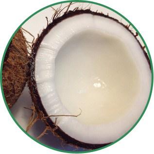 Cocos Nucifera Coconut Oil