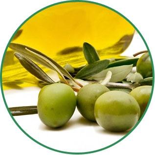 Olea Europaea Olive Fruit Oil